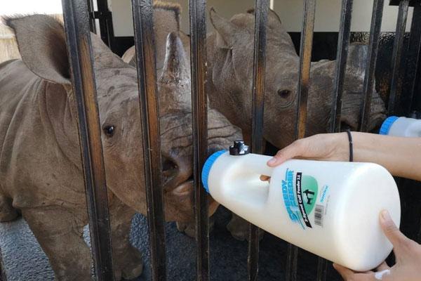 Rhino Connect Annual Milk Fundraiser